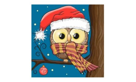 Week 50 – Owl with a Santa hat