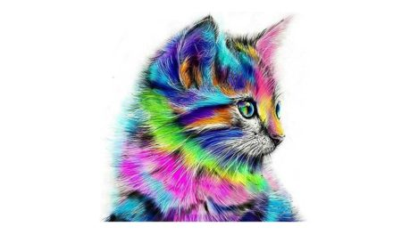 Week 11 – Colorful cat