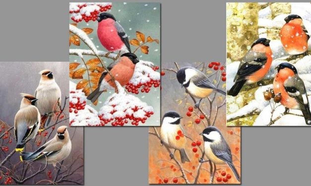Week 42 – Small birds in autumn and winter