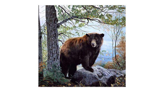 Week 46 – Magnificent bear