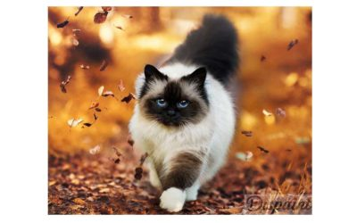 Week 43 – Cat among autumn leaves