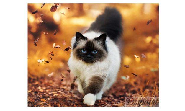 Week 43 – Cat among autumn leaves