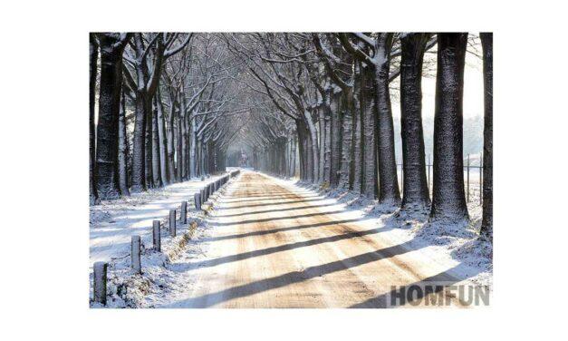 Week 53 – Snowy avenue