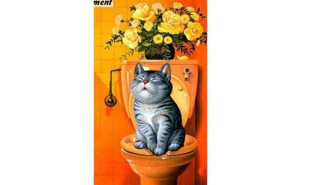 Week 6 – Cat on a toilet