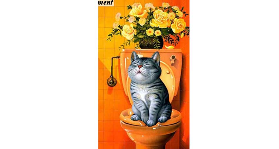cat on a toilet