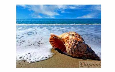 Week 29 – Seashell on the beach