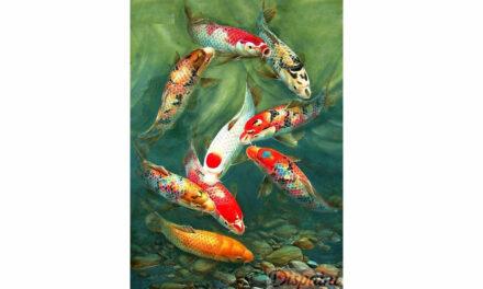 Week 38 – Koi fish